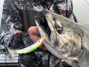 Targeting Great Lakes Salmon on SpinFish