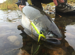 Casting Weighted Spinners For River Coho Salmon