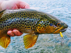 Rooster Tails: The Answer For River/Stream Trout
