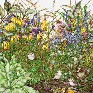 Barbara A. Weets Watercolors