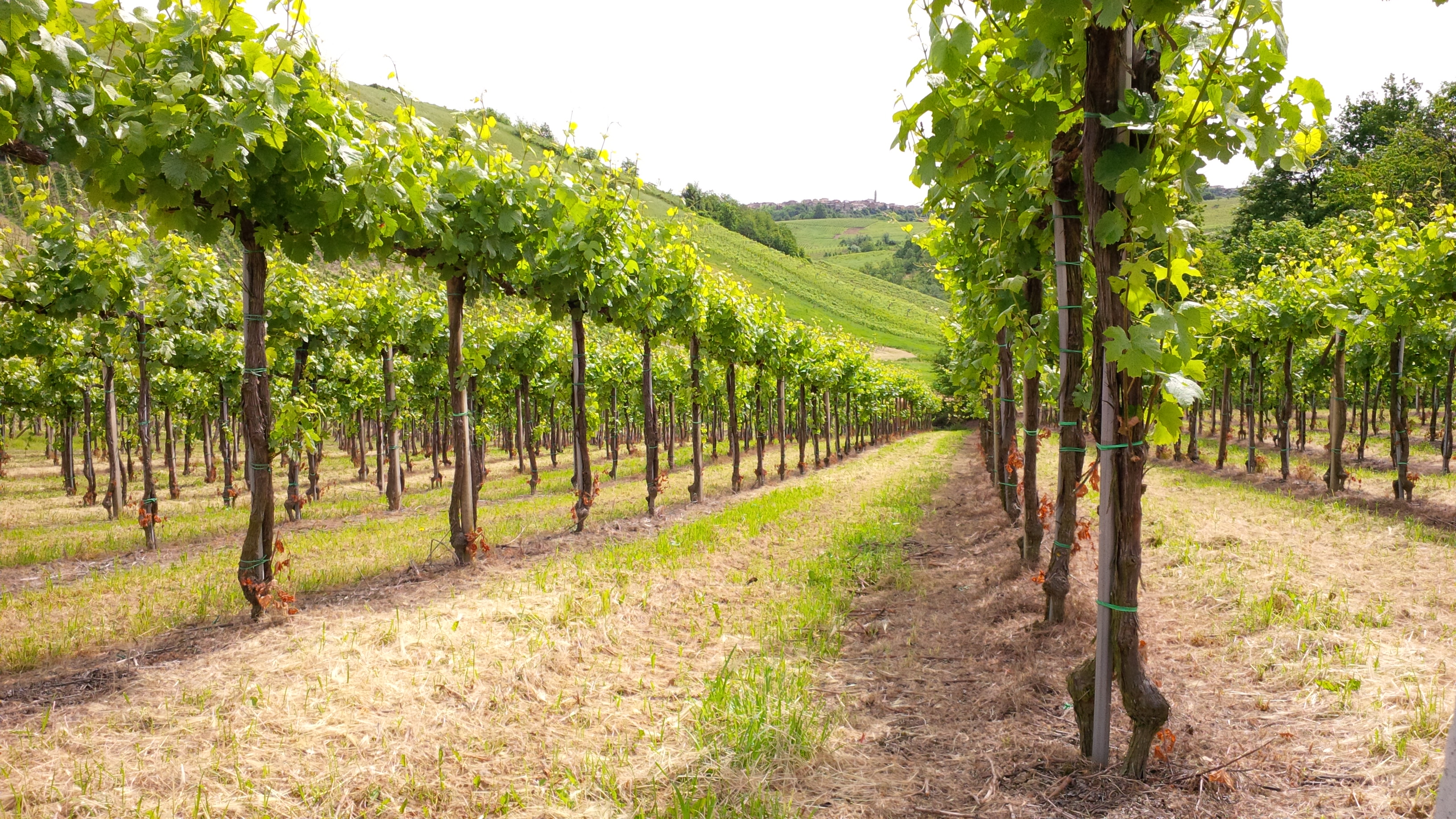 Il giardino del vino
