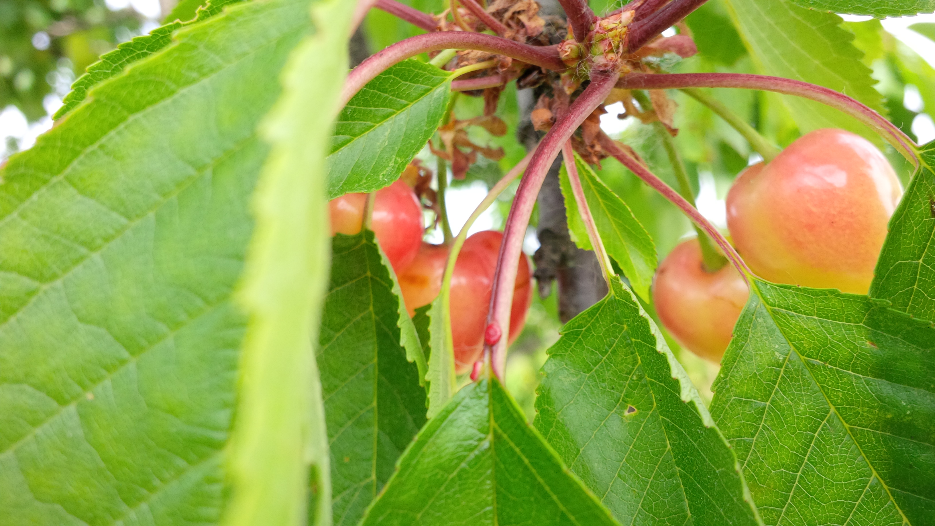I frutti della tenuta