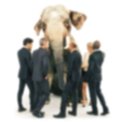 Explore the Elephant, Optimise team performance Give voice to the unspoken Organisational unspoken Team trust