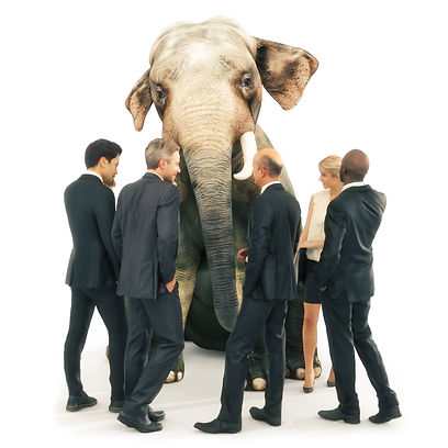 Explore the Elephant, Optimise team performance Give voice to the unspoken Organisational unspoken Team trust