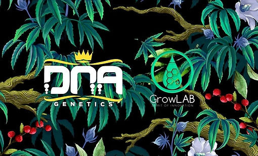 DNA-Genetics-Growlab-Banner%2520(1)_edit