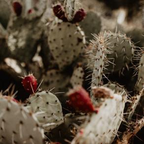 Now I walk into the wild... -  Arizona und Kalifornien - Part 1