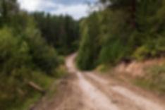 forest-4152755_1280.jpg