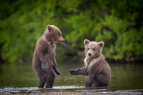 Give Five, Bro!