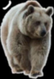 brown bear Transparent.png