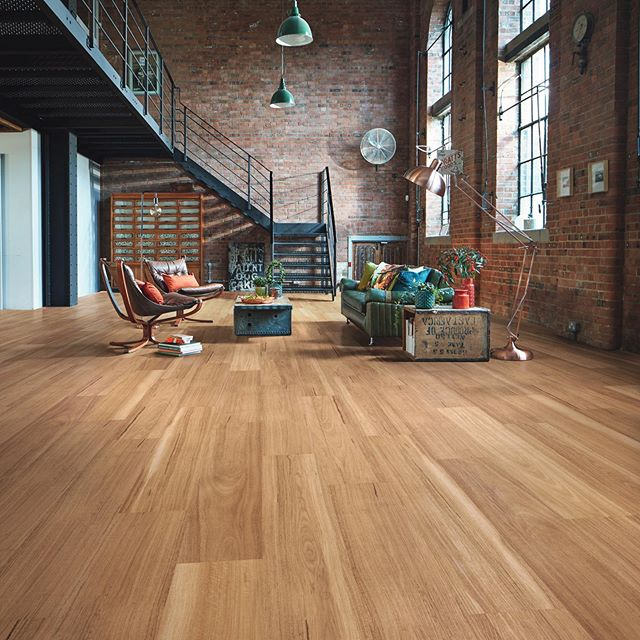 Korlok Warm Spotted Gum