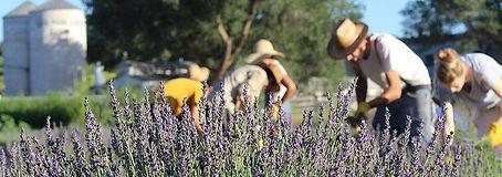 Lavender-Farm-Los-Poblanos.jpg