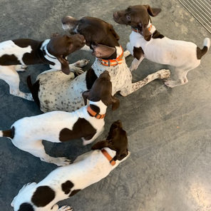 All N Kennel - Mom and Pups
