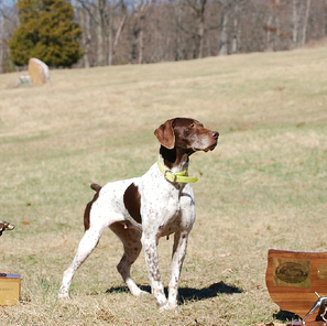 All N Kennel Field Trial Placement