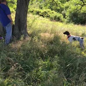 All N Kennels Gun Dog Training