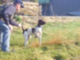 MonkeyShine Kennel Training