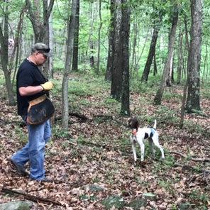 All N Kennel - Gun Dog Training