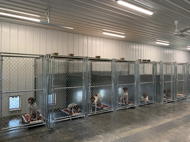 All N Kennel Boarding
