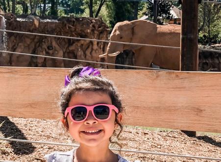 Zoo Day at Zoo Atlanta for the NEW African Savannah