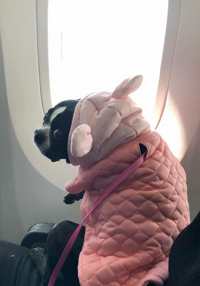 plane window2