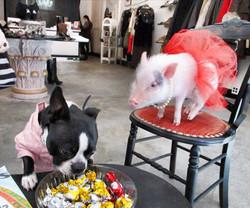 bella and chloe pig