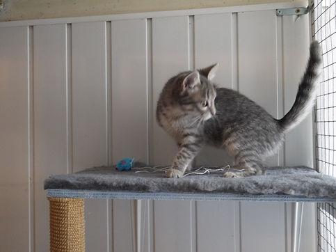 Pension pour chat chassefaim en seine et marne