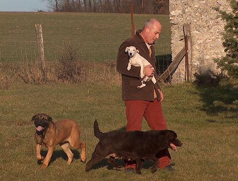 Pension pour chien chassefaim en seine et marne