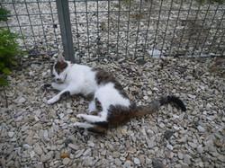 Pension chat chien en seine et marne
