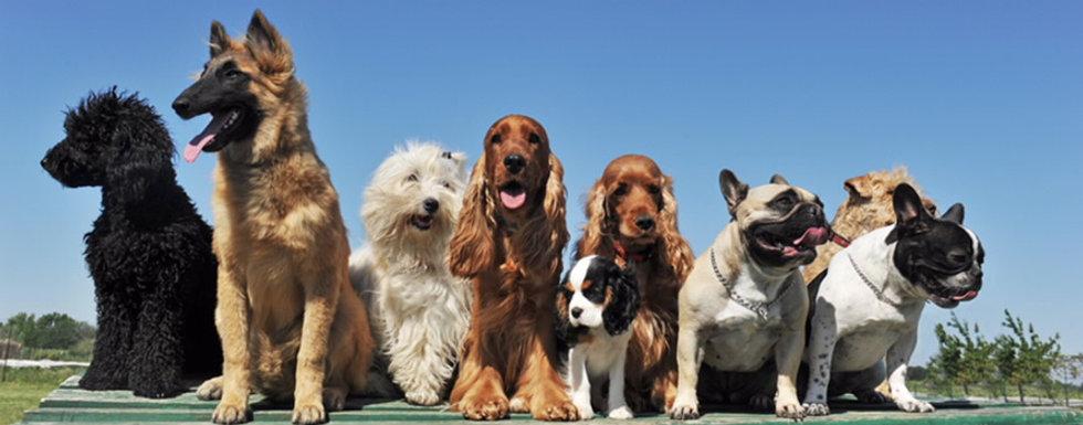 group dog training classs.jpg