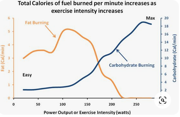 exercises graph.png
