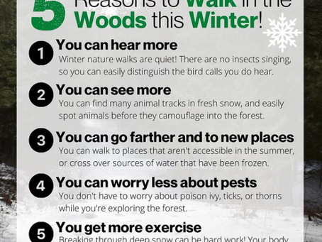 5 Reasons to Walk in the Woods this Winter!
