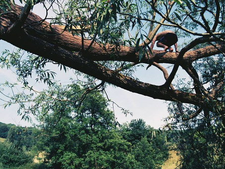 Why kids need to climb trees