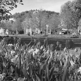 zahradni-a-parkova-banner-homepage-reali