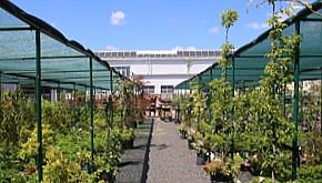 Široká nabídka květin a dřevin na venkovní ploše 2500 m2!