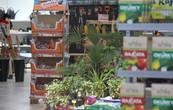 zahradni-parkova-prodejna-42-nahled.jpg
