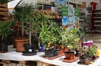 zahradni-parkova-prodejna-48-nahled.jpg