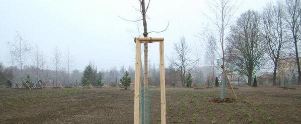 zahradni-a-parkova-revitalizace-hamrniky