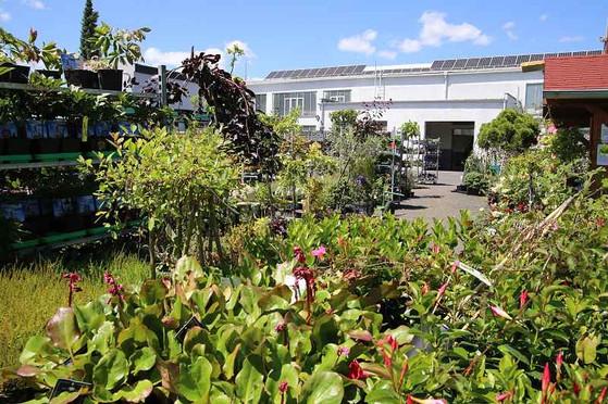 zahradni-parkova-prodejna-10-nahled.jpg
