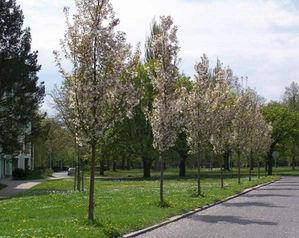 zahradni-a-parkova-vysadba-tresne-hlavni