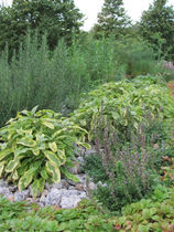 zahradni-a-parkova-bylinkove-zahony-ml-1