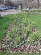 zahradni-a-parkova-udrzba-zelene-plzen-1
