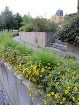 zahradni-a-parkova-letnickove-zahony-ml-