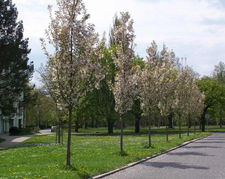 zahradni-a-parkova-vysadba-tresne-park-0