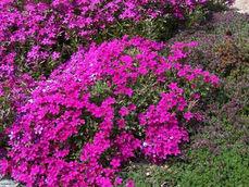 zahradni-a-parkova-vila-cernosice-10.jpg