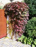 zahradni-a-parkova-mala-zahradka-10.jpg