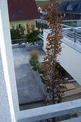 zahradni-a-parkova-stresni-zahrada-03.jp