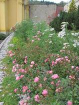 zahradni-a-parkova-bylinkove-zahony-ml-0