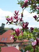 zahradni-a-parkova-vila-cernosice-11.jpg