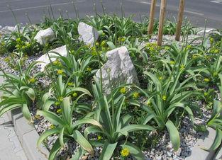 zahradni-a-parkova-tesco-ml-05.jpg
