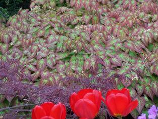 zahradni-a-parkova-vila-cernosice-06.jpg