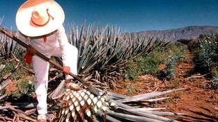 10 datos curiosos sobre el tequila